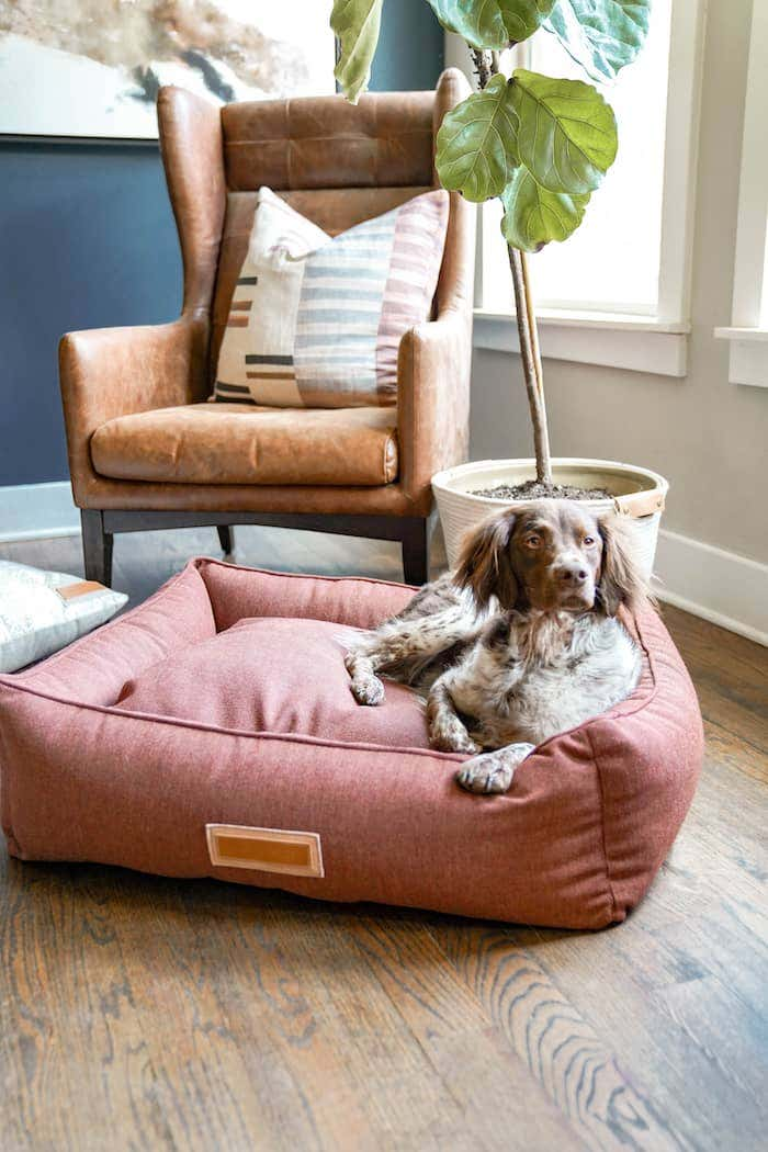 Dog lounging on a comfortable Sunbrella fabric upholstered dog bed cover.