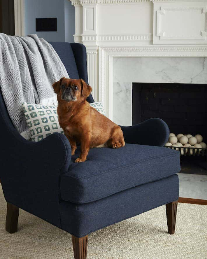 pet friendly sunbrella upholstery fabric