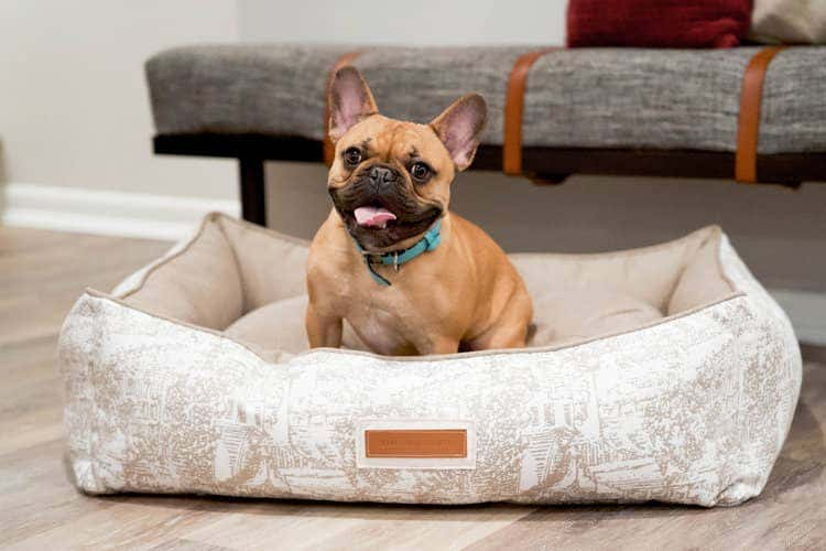 Puppy sitting on a tan patterned Sunbrella fabric upholstered dog bed from the Houndry.