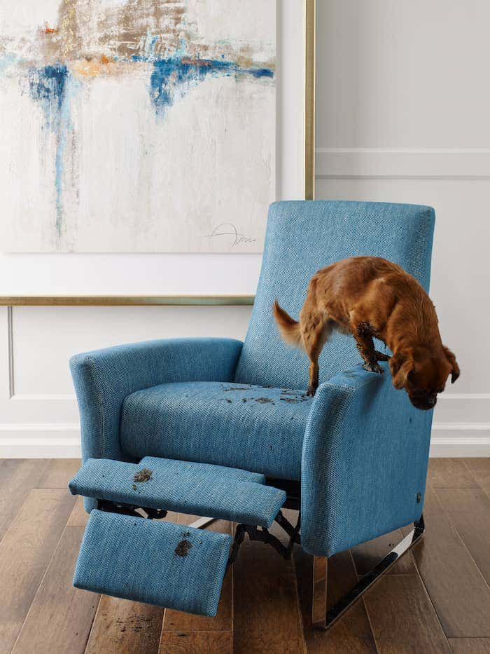Be prepared by knowing the best way to clean upholstery fabric. Then, this adorable puppy's muddy paws won't threaten the beauty of this recliner upholstered with blue Sunbrella fabric.